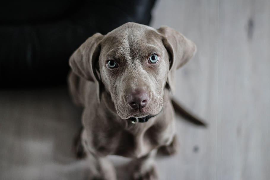 """Když pes potřebuje """"záchranku"""""""